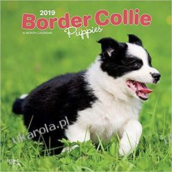 Kalendarz Border Collie Puppies 2019 Square Wall Calendar