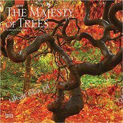 Kalendarz Drzewa The Majesty of Trees 2019 Square Wall Calendar