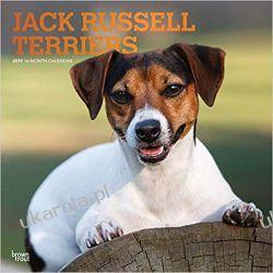 Kalendarz Jack Russell Terriers 2019 Calendar Zagraniczne