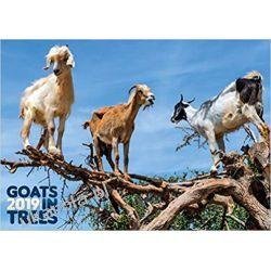 Kalendarz kozy na drzewach Goats in Trees 2019 Calendar