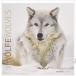 Kalendarz wilki Wolves Calendar 2019