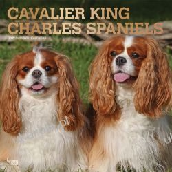 Kalendarz Cavalier King Charles Spaniels 2019 Calendar 30x30 cm Książki i Komiksy