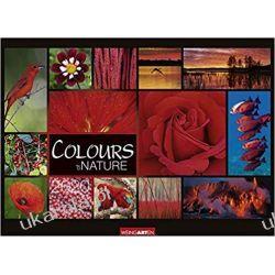 Kalendarz Colours of Nature 2020 68x49cm Calendar kolory natury Książki i Komiksy