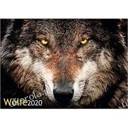Kalendarz Wolves 2020 Calendar wilki Książki i Komiksy