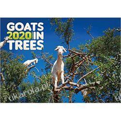 Kalendarz Goats in Trees 2020 Calendar kozy na drzewach Książki i Komiksy