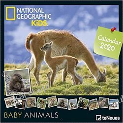 National Geographic Kids Baby Animals 2020 Calendar  Książki i Komiksy
