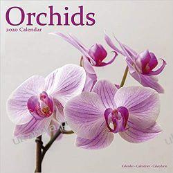Kalendarz Orchids Calendar 2020 kwiaty Książki i Komiksy
