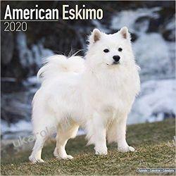 Kalendarz American Eskimo Calendar 2020 Zagraniczne