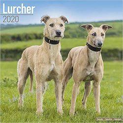 Kalendarz Lurcher Calendar 2020 Marynarka Wojenna