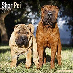 Kalendarz Shar Pei Calendar 2020 Kalendarze ścienne