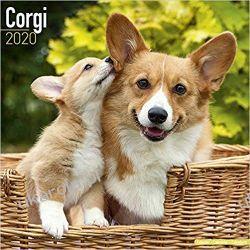 Kalendarz Corgi Calendar 2020