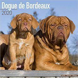 Kalendarz Dogue de Bordeaux Calendar 2020 Książki i Komiksy