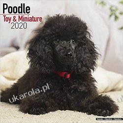 Kalendarz Poodle (Toy & Miniature) Calendar 2020 Książki i Komiksy