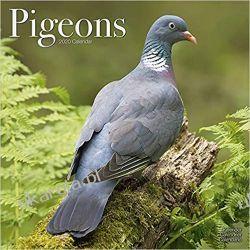 Kalendarz Pigeons Calendar 2020 gołębie Książki i Komiksy