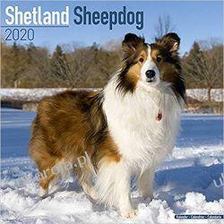 Kalendarz Shetland Sheepdog Calendar 2020 owczarki szetlandzkie Książki i Komiksy