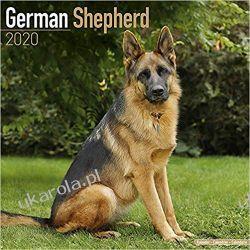Kalendarz German Shepherd Calendar 2020 Książki i Komiksy