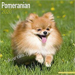 Kalendarz Pomeranian Calendar 2020 30x30 cm Sztuka, malarstwo i rzeźba