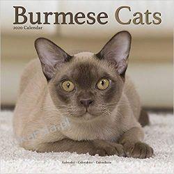 Kalendarz Burmese Cats Calendar 2020 30x30 cm koty Książki i Komiksy