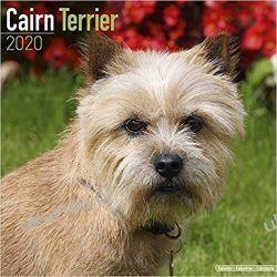 Kalendarz Cairn Terrier Calendar 2020 30x30cm Książki i Komiksy