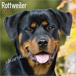 Kalendarz Rottweiler Calendar 2020 30x30 cm Książki i Komiksy