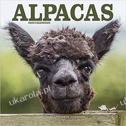 Kalendarz Alpacas Calendar 2020 alpaki 30x30 cm Książki i Komiksy