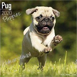Kalendarz Pug Puppies Calendar 2020 30x30 cm Książki i Komiksy