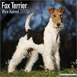 Kalendarz Fox Terrier Wire Haired Calendar 2020 30x30 cm Książki i Komiksy
