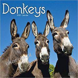 Kalendarz Donkeys Calendar 2020 30x30 cm osiołki Książki i Komiksy