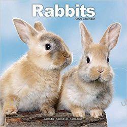 Kalendarz Rabbits Calendar 2020 30x30 cm króliki Książki i Komiksy