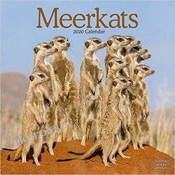 Kalendarz Meerkats Calendar 2020 30x30 cm Książki i Komiksy