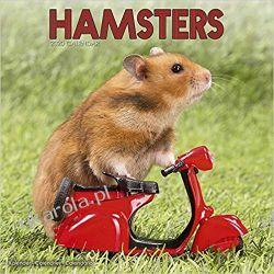 Kalendarz Hamsters Calendar 2020 30x30 cm Książki i Komiksy