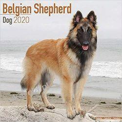 Kalendarz Belgian Shepherd Dog Calendar 2020 30x30 cm Lotnictwo