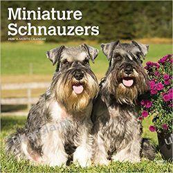 Schnauzers Miniature 2020 Square Wall Calendar sznaucer miniaturowy Kalendarze ścienne