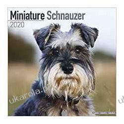 Miniature Schnauzer Calendar 2020 sznaucery miniaturowe Pozostałe