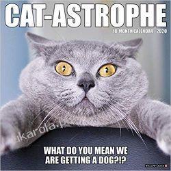 Kalendarz Cat-Astrophe 2020 Wall Calendar śmieszne koty Pozostałe