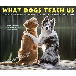 What Dogs Teach Us 2020 Box Calendar  Historyczne