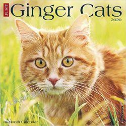 Ginger Cats 2020 Wall Calendar koty Historyczne