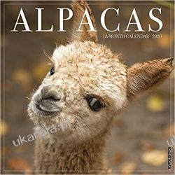 Kalendarz Alpacas 2020 Wall Calendar alpaki Lotnictwo