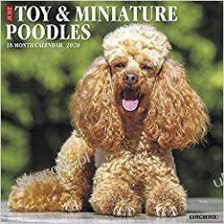 Just Toy & Miniature Poodles 2020 Calendar Pozostałe
