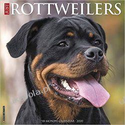 Kalendarz z psami Just Rottweilers 2020 Calendar Zagraniczne