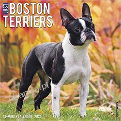 Kalendarz z psami Just Boston Terriers 2020 Wall Calendar  Pozostałe