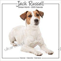 Kalendarz z psami Jack Russell Studio Calendar 2020  Zagraniczne