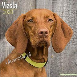 Kalendarz z psami Vizsla Calendar 2020 Pozostałe