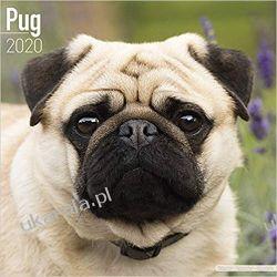 Pug Calendar 2020  Kalendarze ścienne