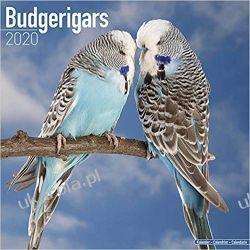 Budgerigars Calendar 2020 papużki faliste Biografie, wspomnienia