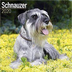 Schnauzer Calendar 2020 Pozostałe