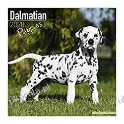 Dalmatian Puppies Calendar 2020 dalmatyńczyki Kalendarze ścienne