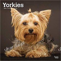 Yorkshire Terriers Intl 2020 Square Wall Calendar jorki Kalendarze ścienne