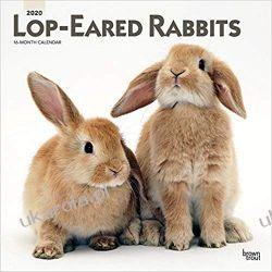 Lop Eared Rabbits 2020 Square Wall Calendar Króliki Zwisłouche Marynarka Wojenna
