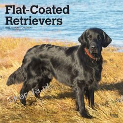 Flat Coated Retrievers 2020 Square Wall Calendar Ryby
